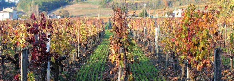 Terroir and planting ratios