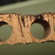 Natural cork from Portugal